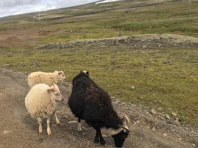 冰島環島自駕環島攻略Day4:東海岸939公路