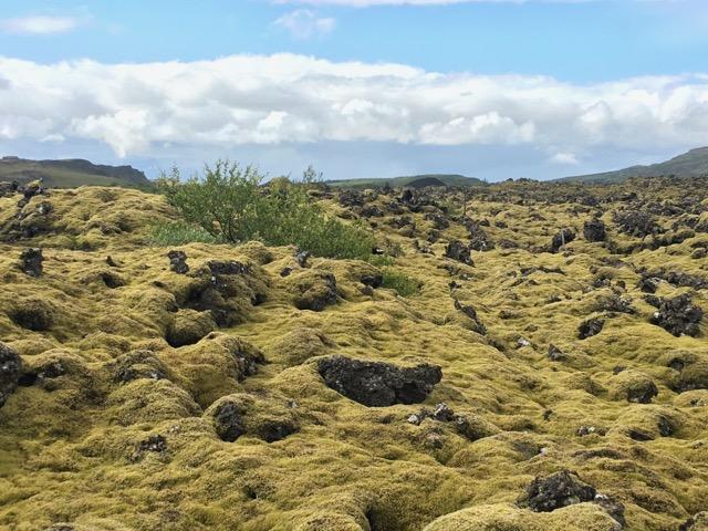 冰島環島自駕環島攻略苔原