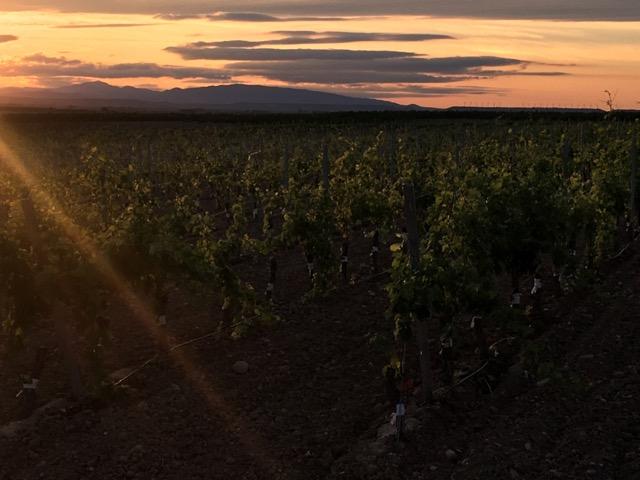 【西班牙北部】Pago de Cirsus 特級葡萄酒莊來去住一晚
